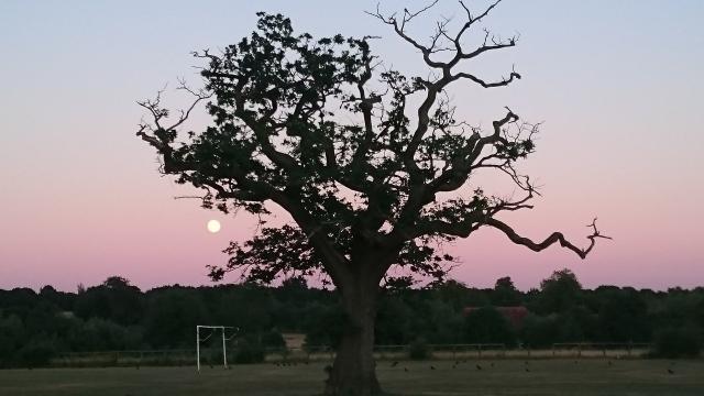 treeandmoon