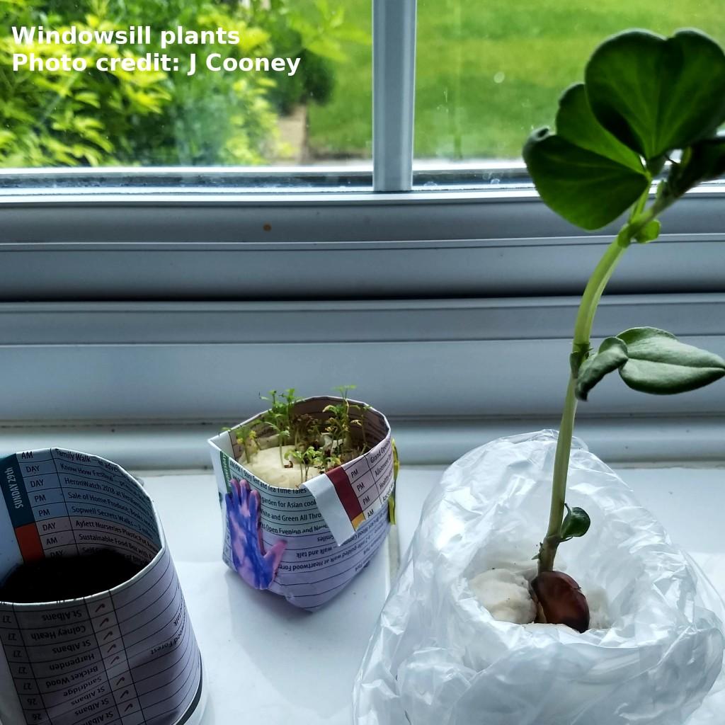 Seedlings on a windowsill.